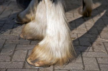 Shire sokken